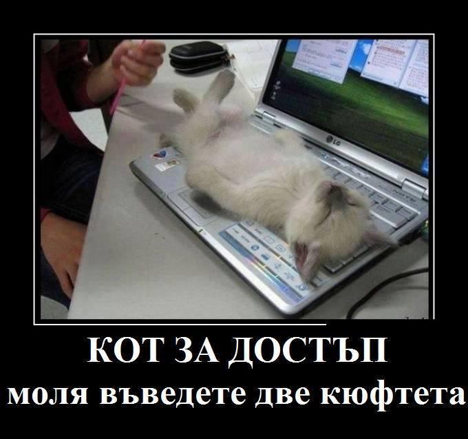 Кот за достъп